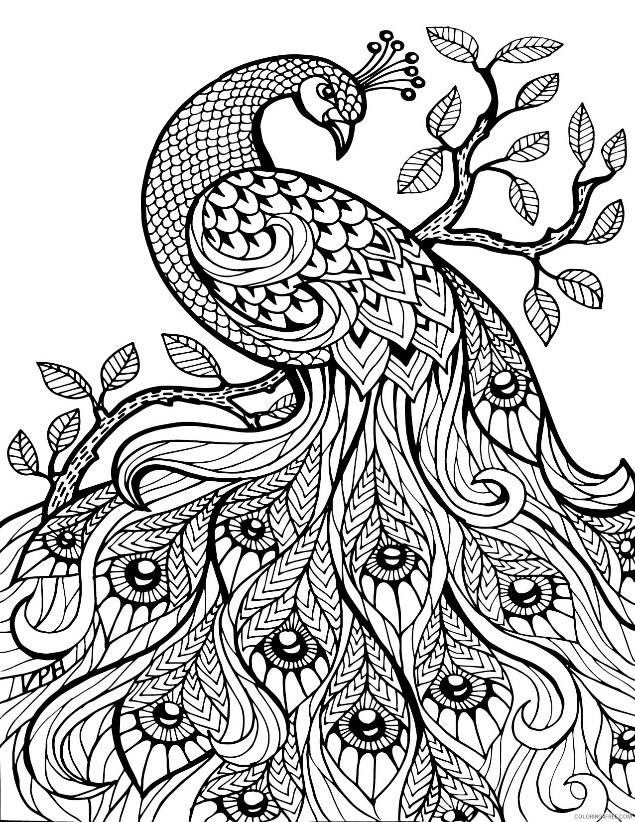 adult coloring pages peacock Coloring4free