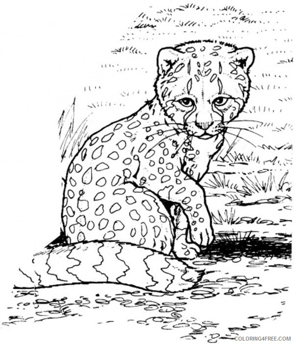 baby cheetah coloring pages Coloring4free
