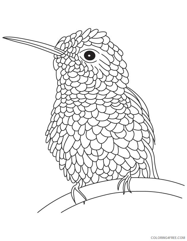 bee hummingbird coloring pages Coloring4free