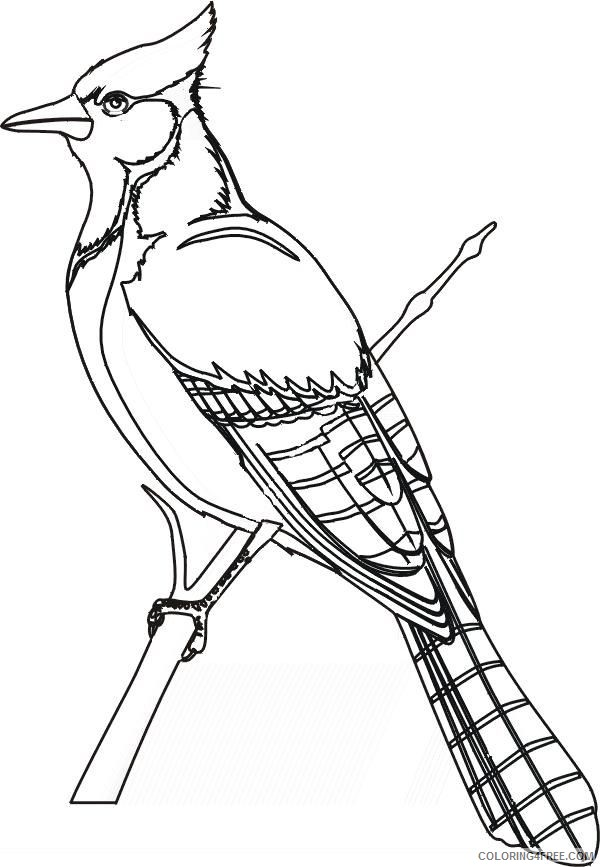 bird coloring pages blue jay Coloring4free