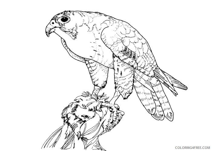 bird coloring pages falcon Coloring4free