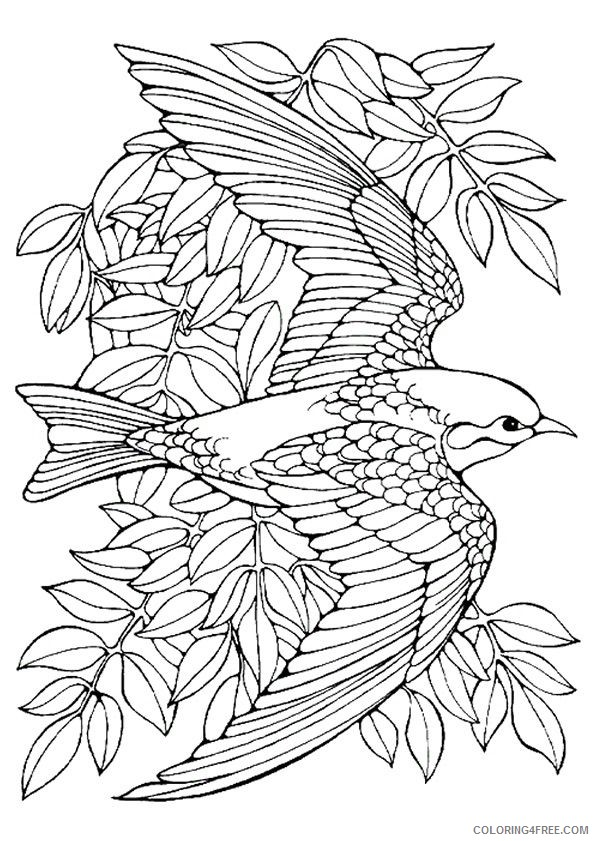 bird coloring pages for adults Coloring4free