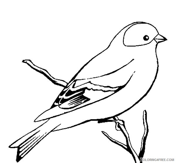 bird coloring pages on branch Coloring4free