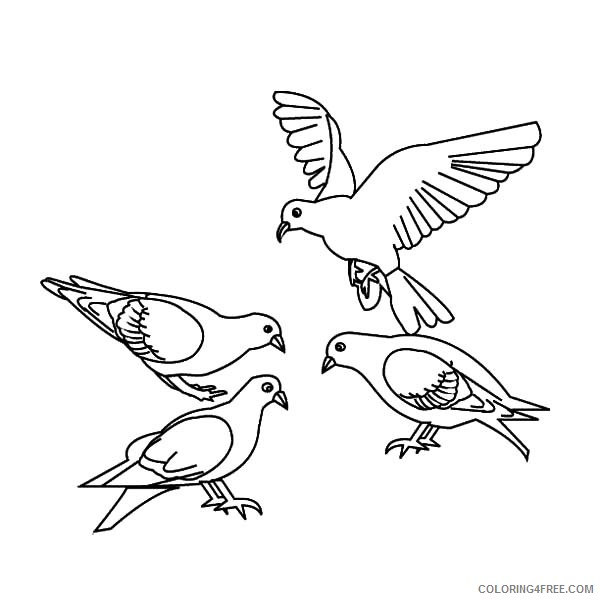 bird coloring pages pigeon Coloring4free
