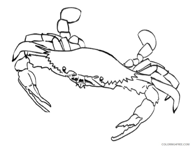 blue crab coloring pages printable Coloring4free