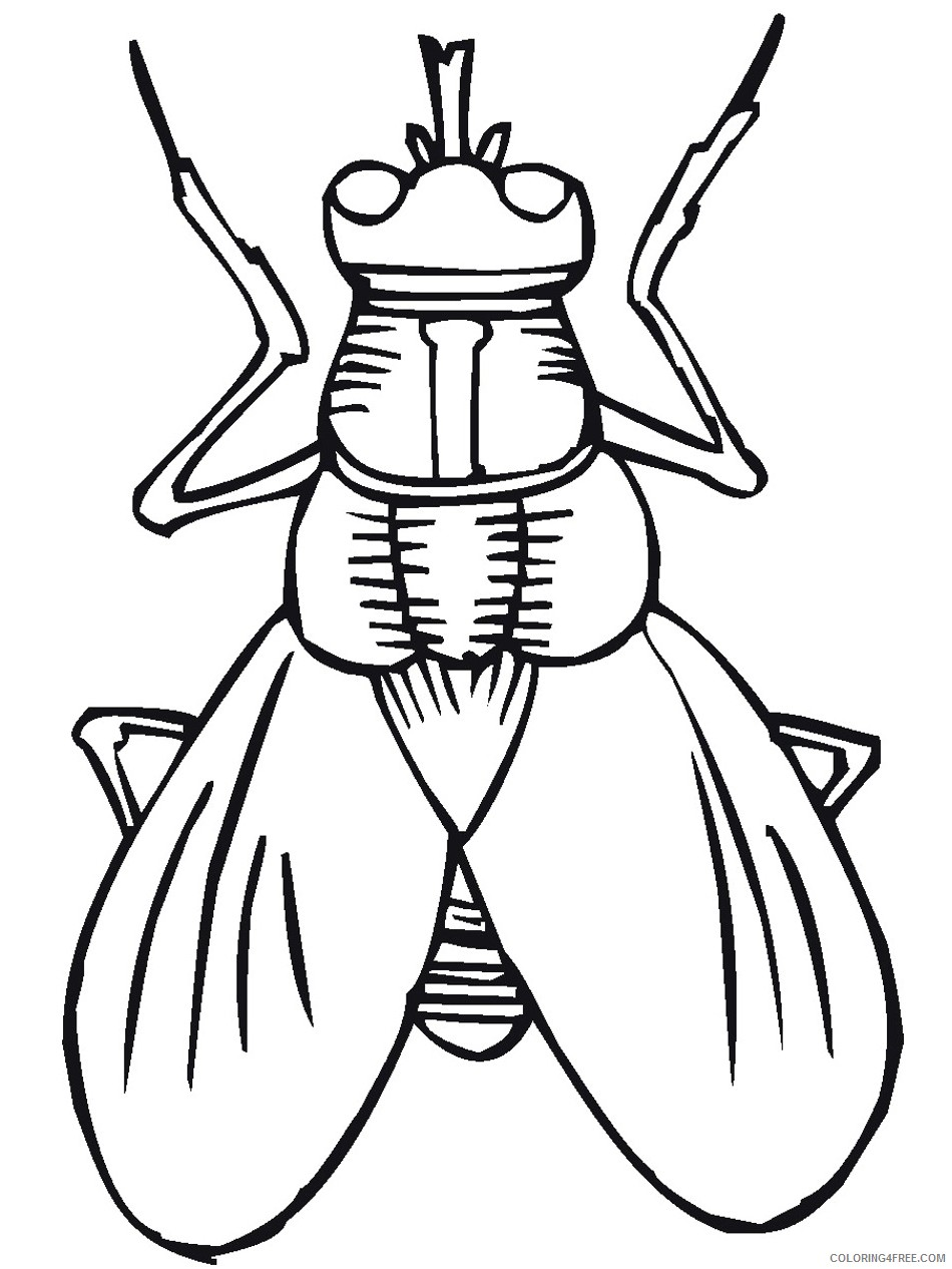bug coloring pages fly Coloring4free