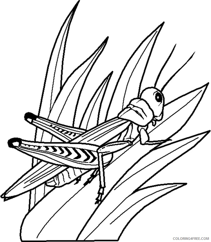 bug coloring pages grasshopper on grass Coloring4free