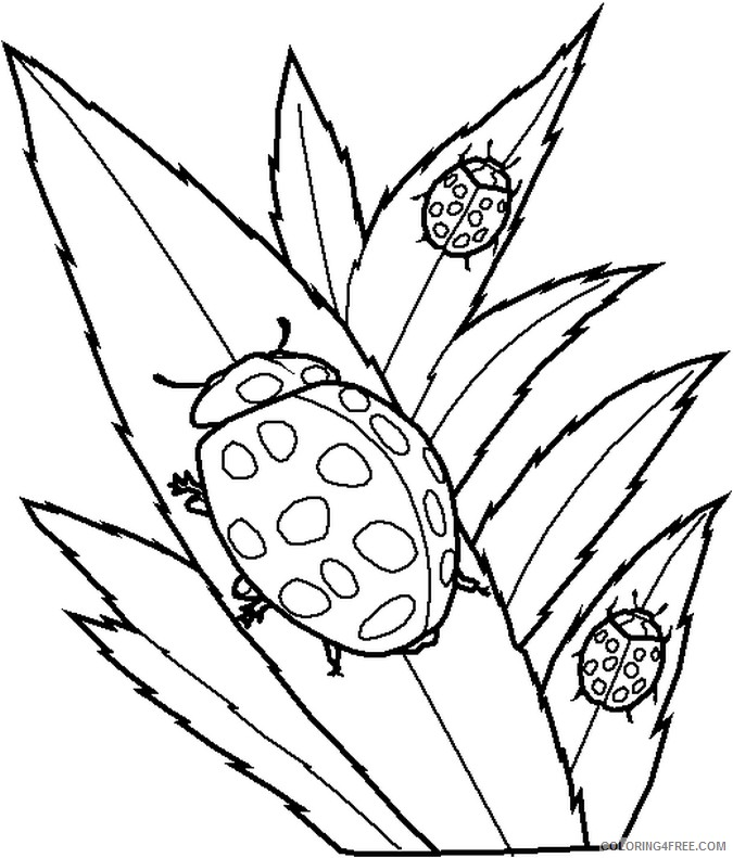 bug coloring pages ladybugs on leaves Coloring4free