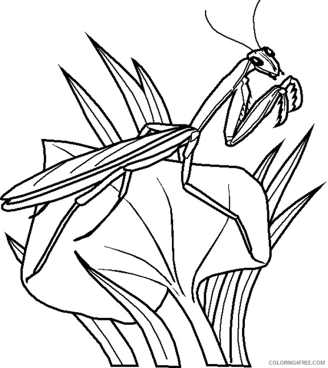bug coloring pages mantis on leaf Coloring4free