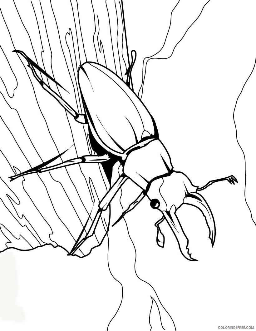 bug coloring pages stag beetle on a tree Coloring4free