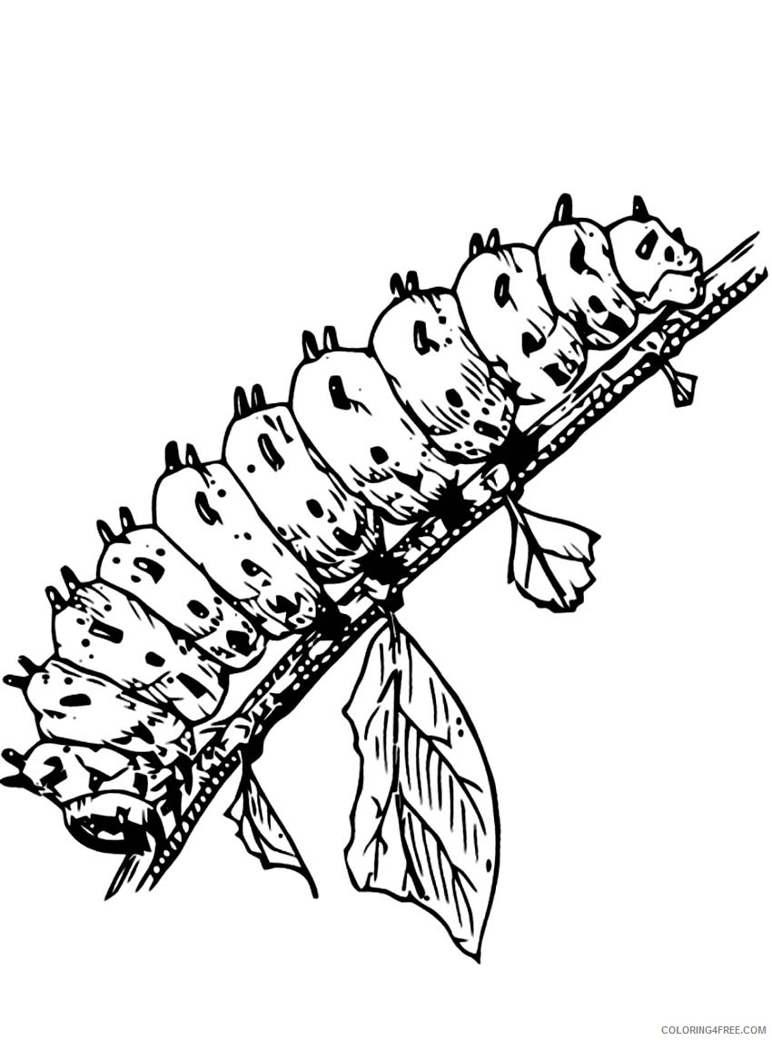 caterpillar coloring pages on branch Coloring4free