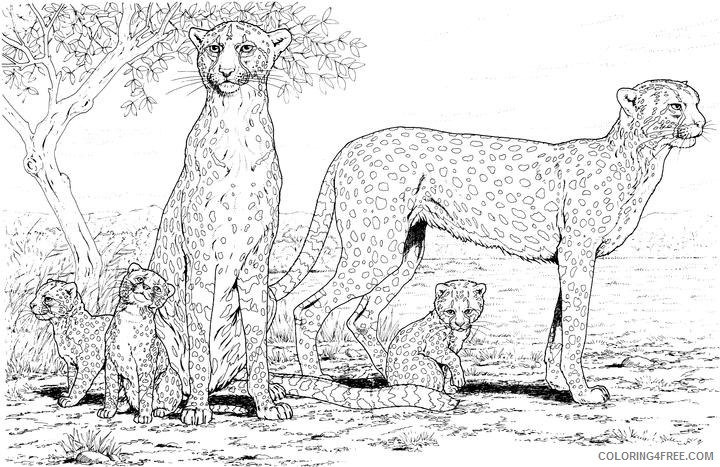 cheetah coloring pages cheetah family Coloring4free