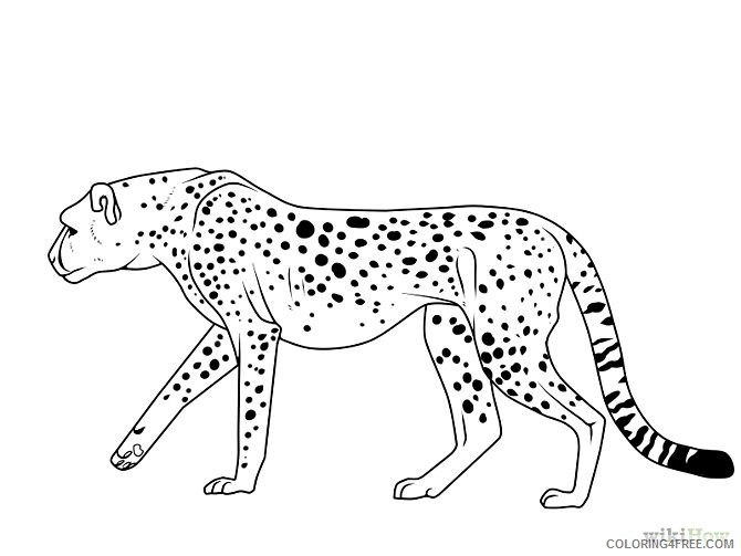 cheetah coloring pages free to print Coloring4free