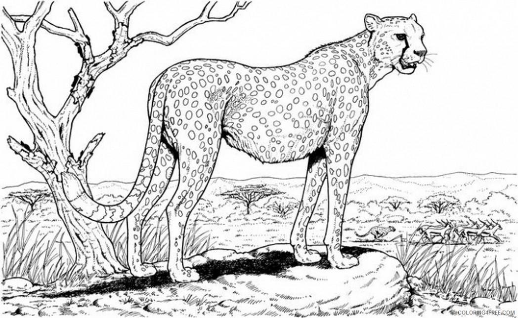 cheetah coloring pages king of savanna Coloring4free