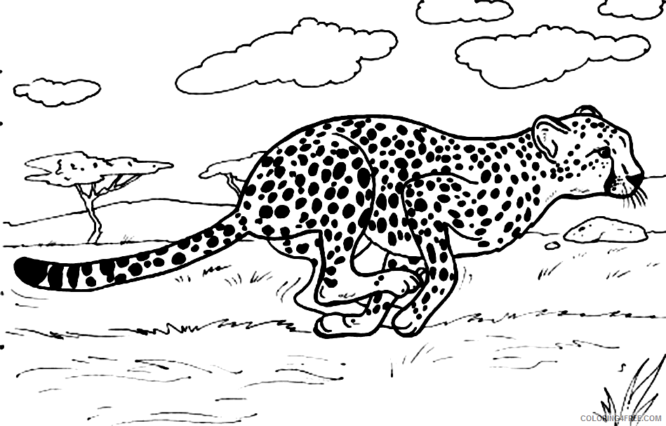 cheetah coloring pages running in savanna Coloring4free