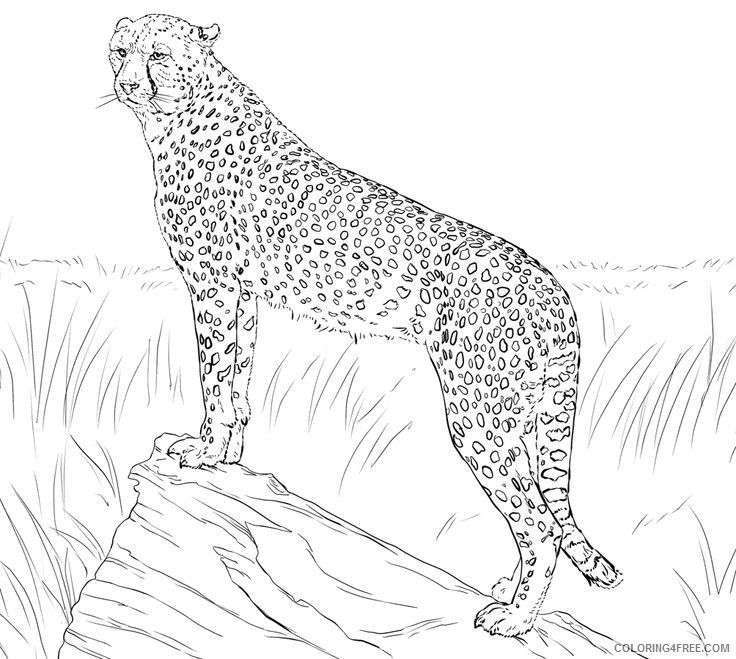 cheetah coloring pages standing Coloring4free