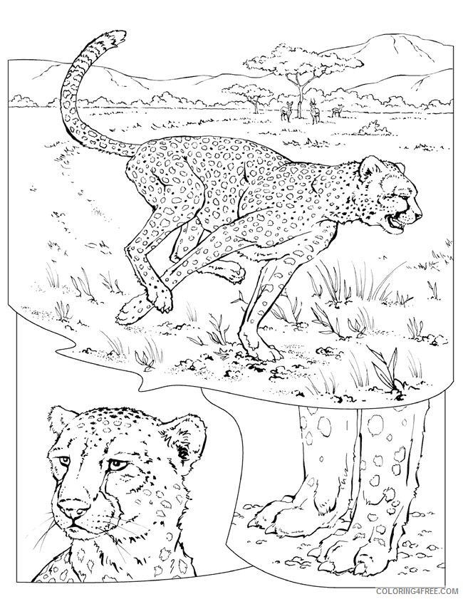 cheetah coloring pages to print Coloring4free