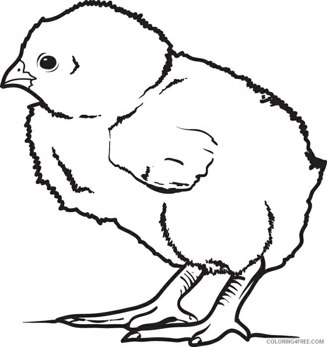 chicken coloring pages chick Coloring4free