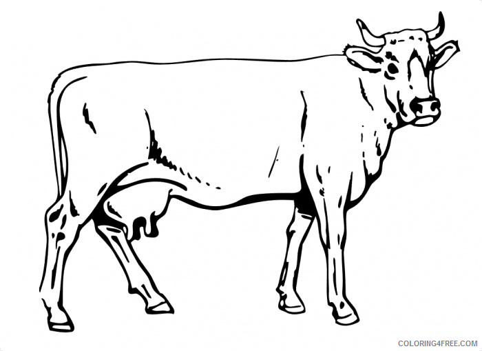 cow coloring pages free printable Coloring4free
