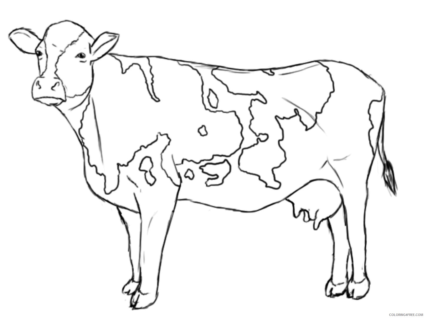 cow coloring pages printable Coloring4free