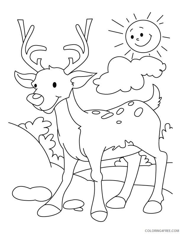 deer coloring pages for kindergarten Coloring4free