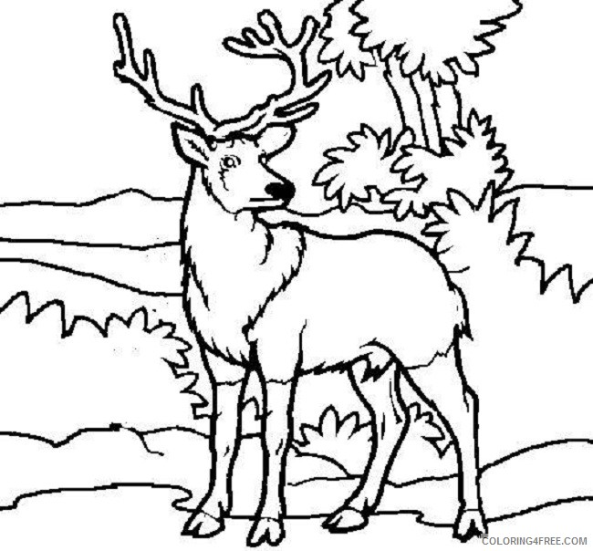 deer coloring pages in the jungle Coloring4free