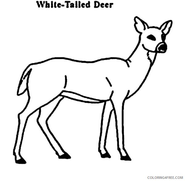 deer coloring pages white tailed Coloring4free