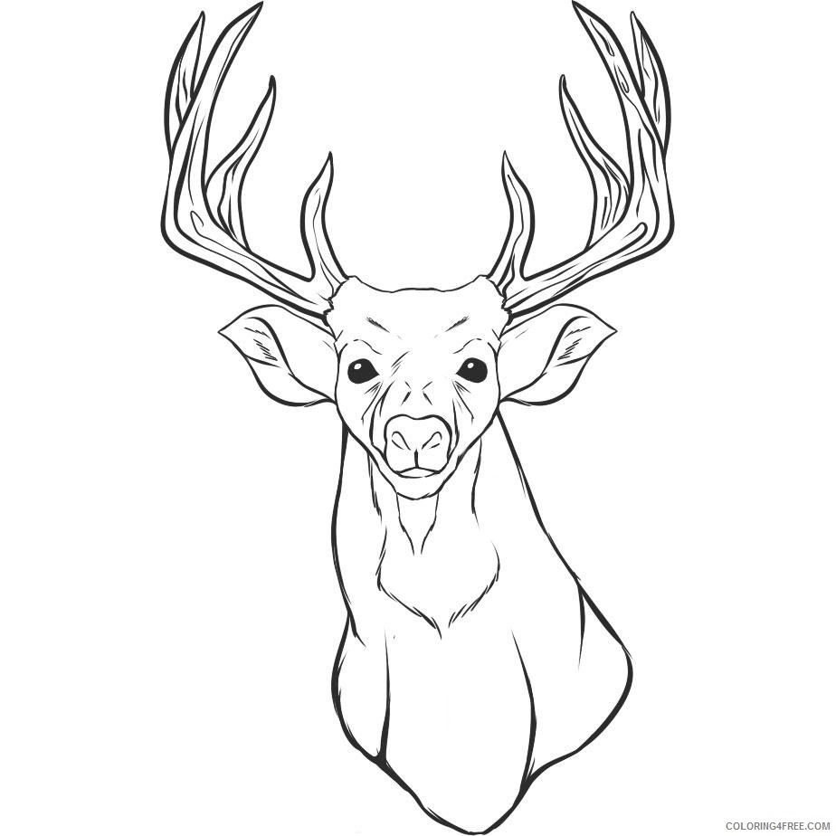 deer head coloring pages Coloring4free