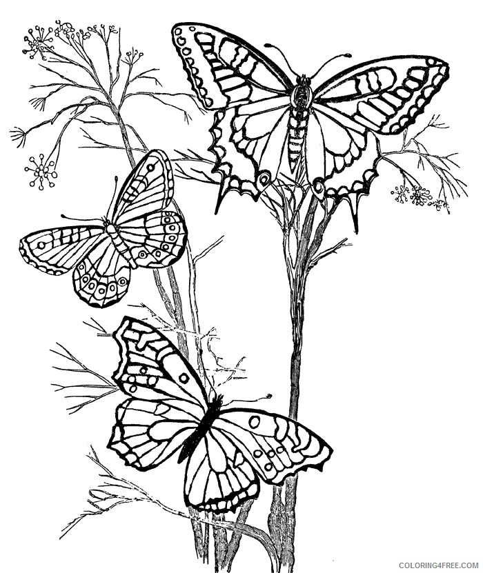 design coloring pages butterflies Coloring4free