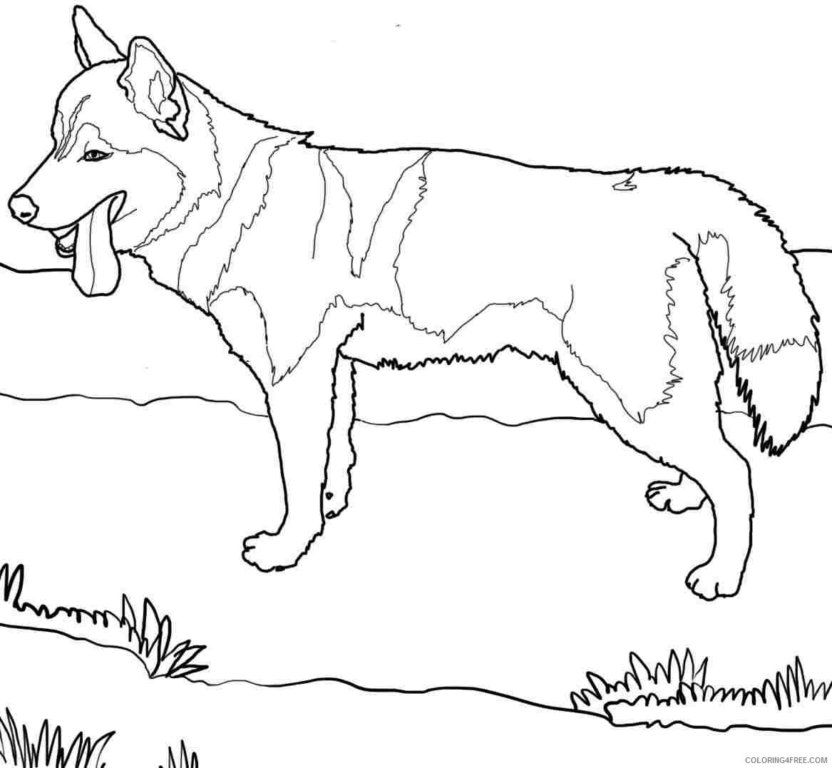 dog coloring pages siberian husky Coloring4free