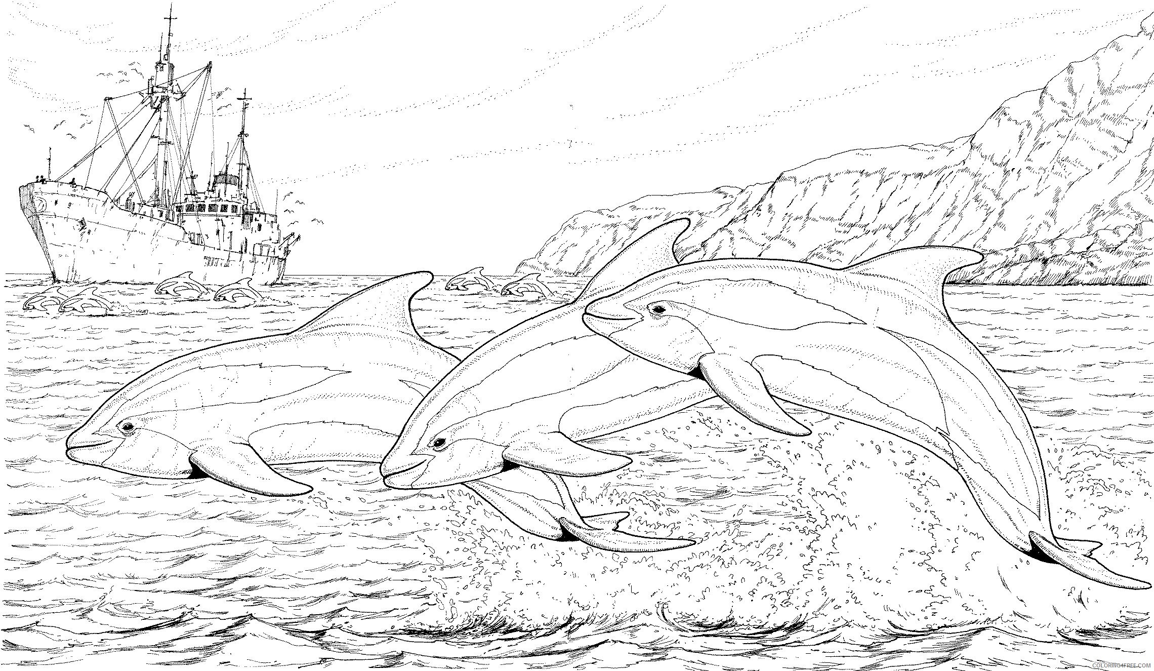 dolphin coloring pages for adults Coloring4free
