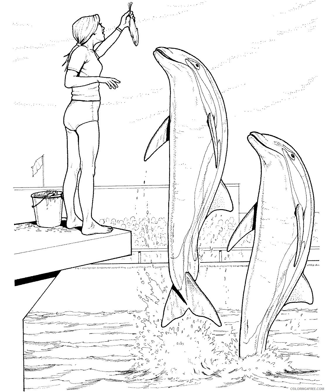 dolphin training coloring pages Coloring4free