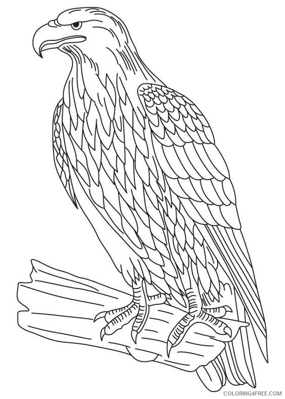 eagle coloring pages printable Coloring4free