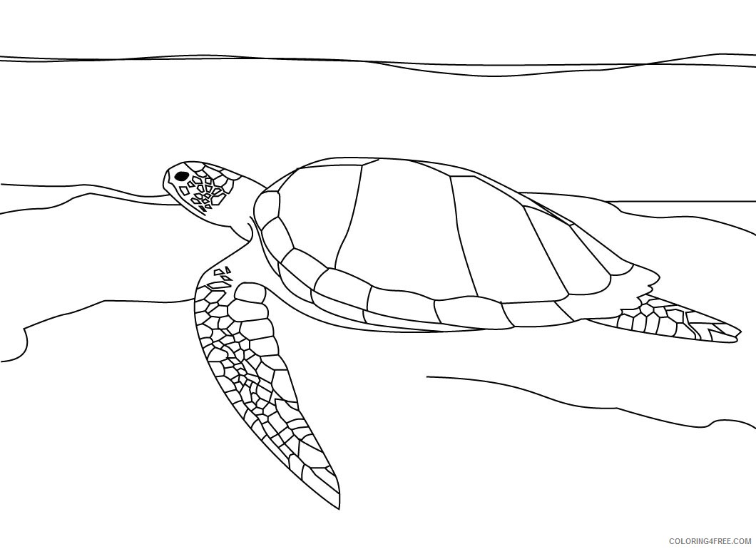 free sea turtle coloring pages for kids Coloring4free