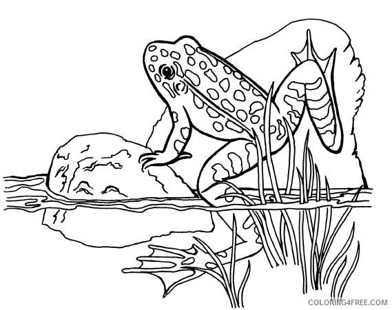 frog coloring pages in pond Coloring4free