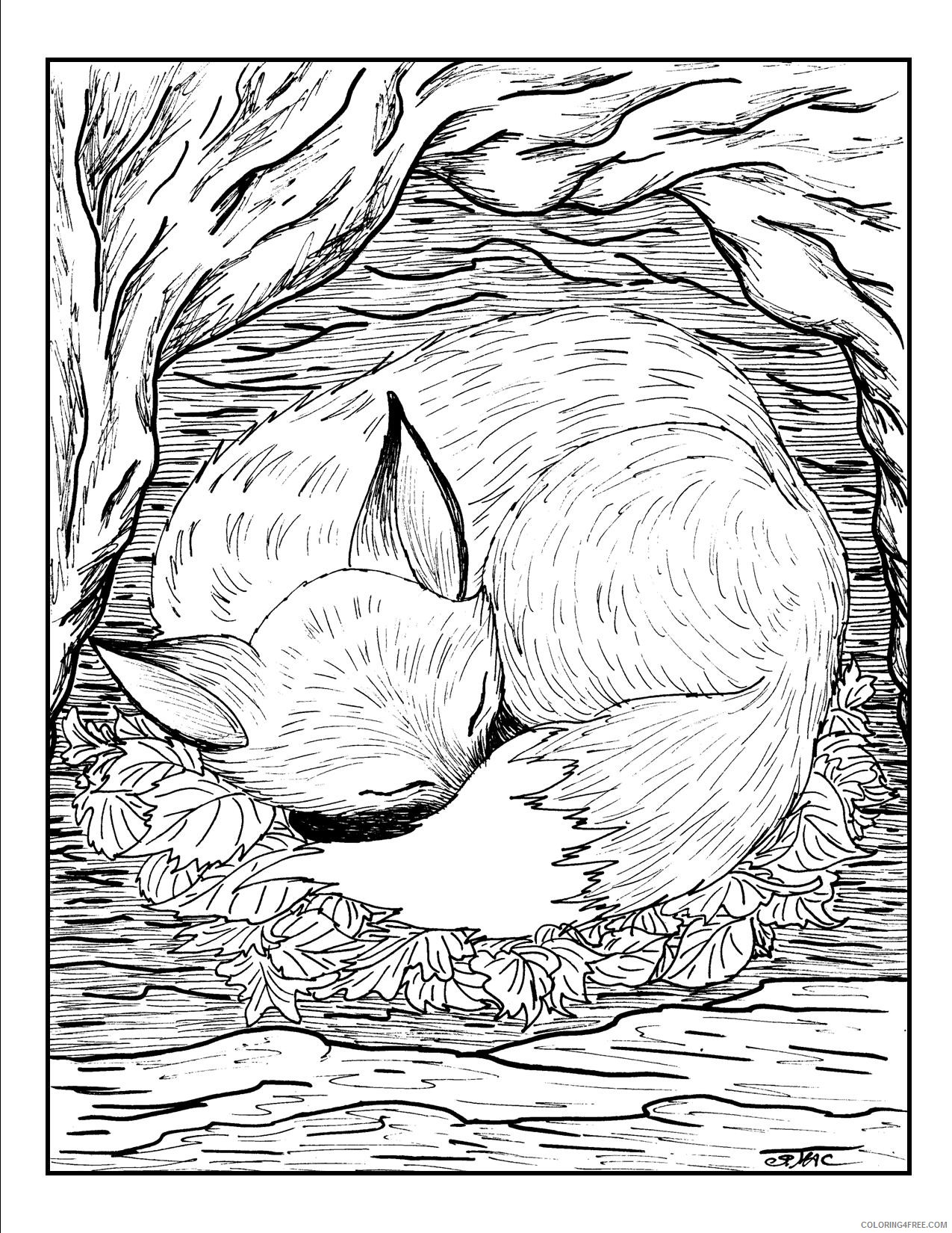 grown up coloring pages red fox sleeping Coloring4free