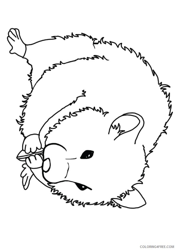 hamster coloring pages seating sunflower seeds Coloring4free