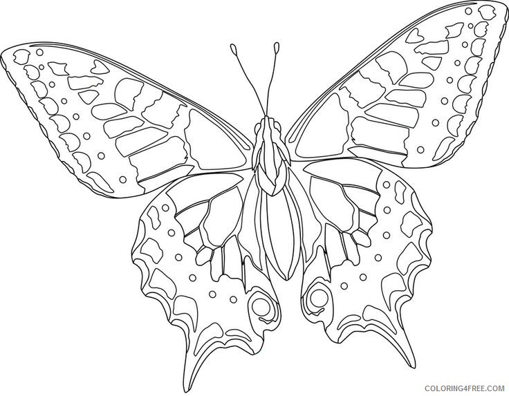 hard butterfly coloring pages for kids Coloring4free
