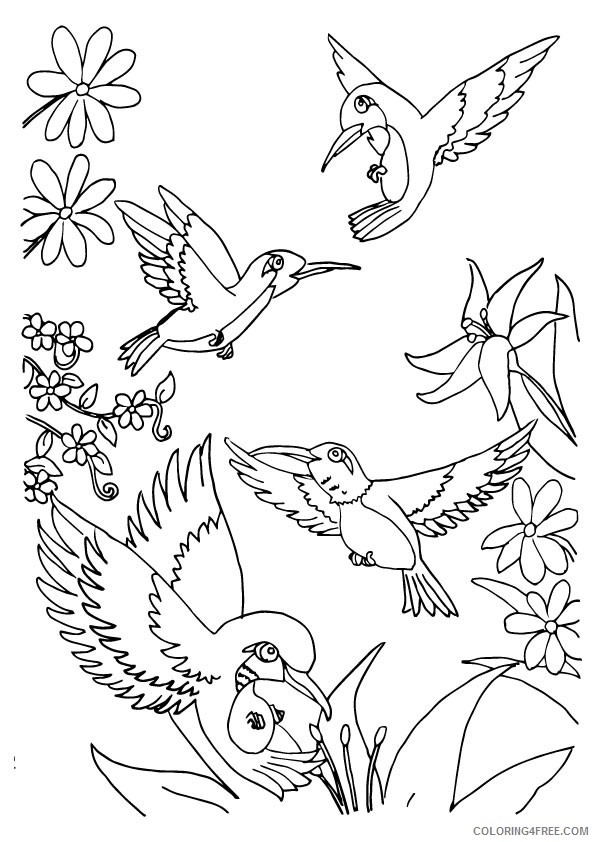 herd of hummingbird coloring pages Coloring4free