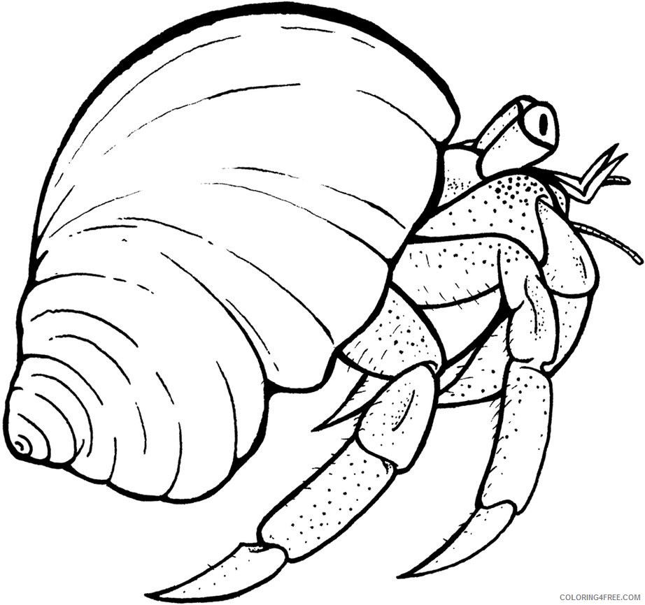 hermit crab coloring pages to print Coloring4free
