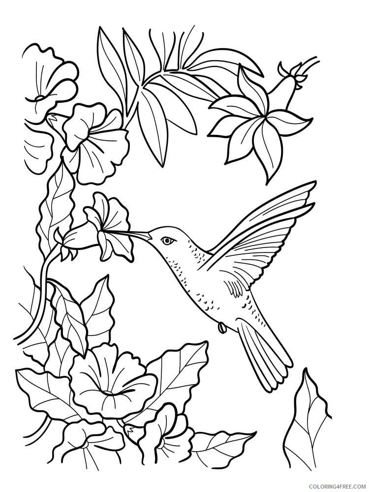 hummingbird coloring pages eating nectar from flowers Coloring4free