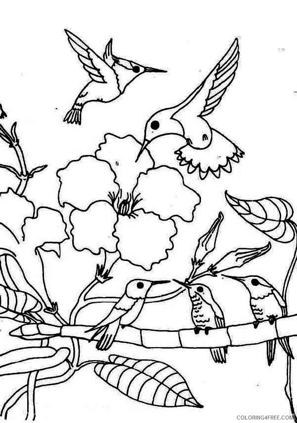 hummingbird coloring pages family Coloring4free