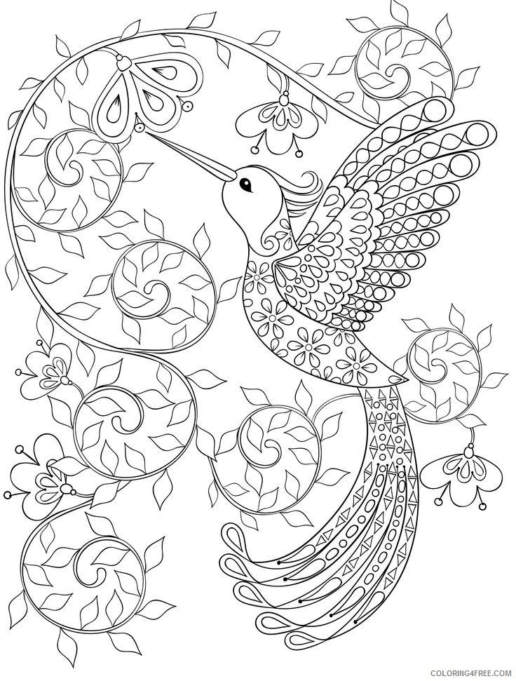hummingbird coloring pages for adults printable Coloring4free