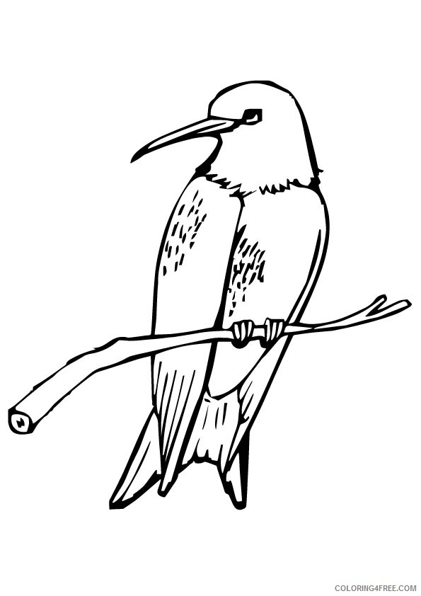hummingbird coloring pages perched on branch Coloring4free