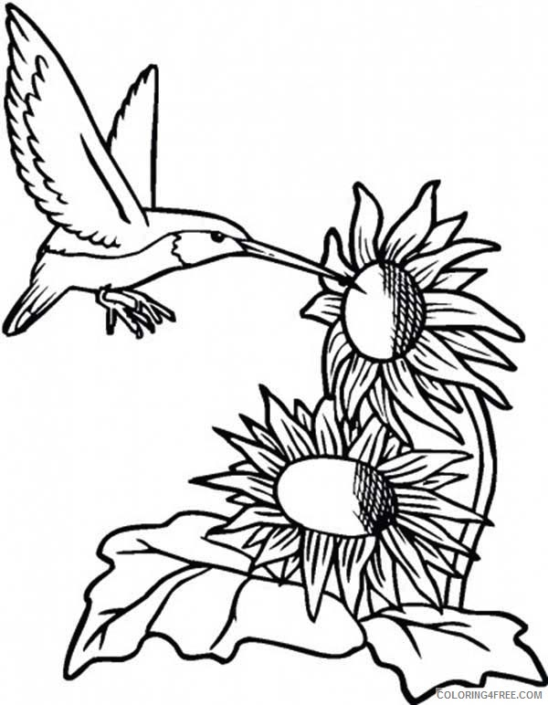 hummingbird coloring pages sunflowers Coloring4free