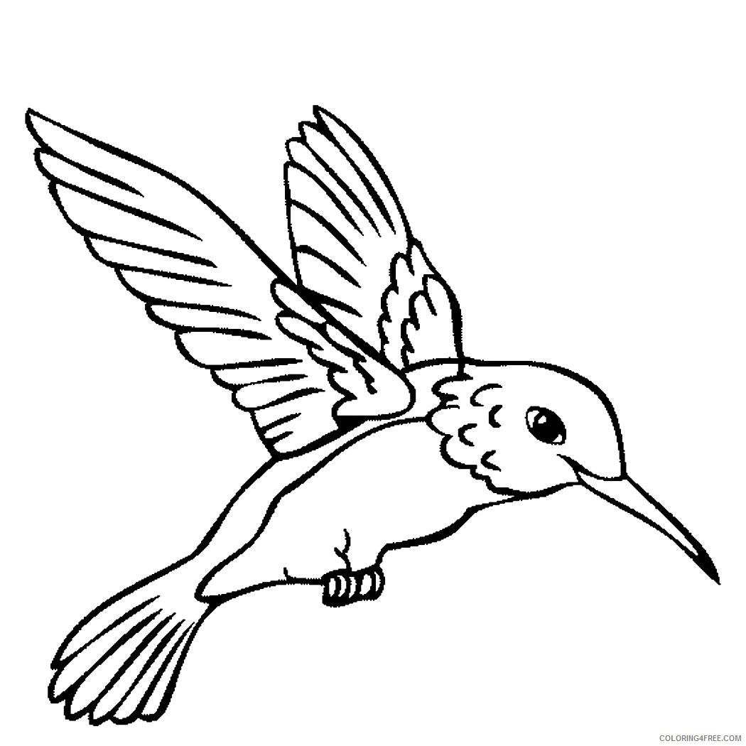 hummingbird coloring pages to print Coloring4free