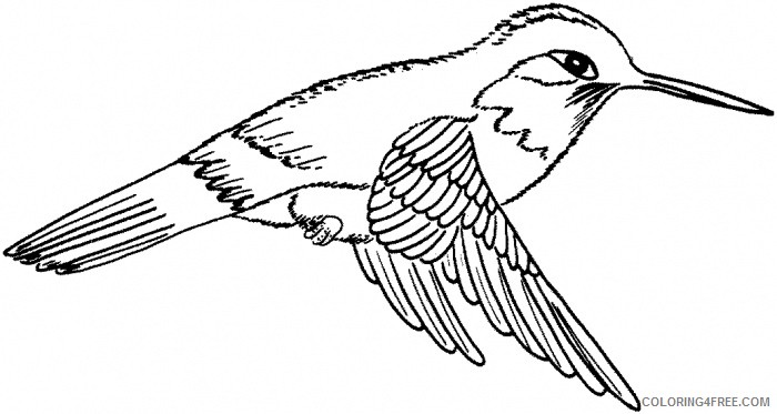 hummingbird flying coloring pages Coloring4free