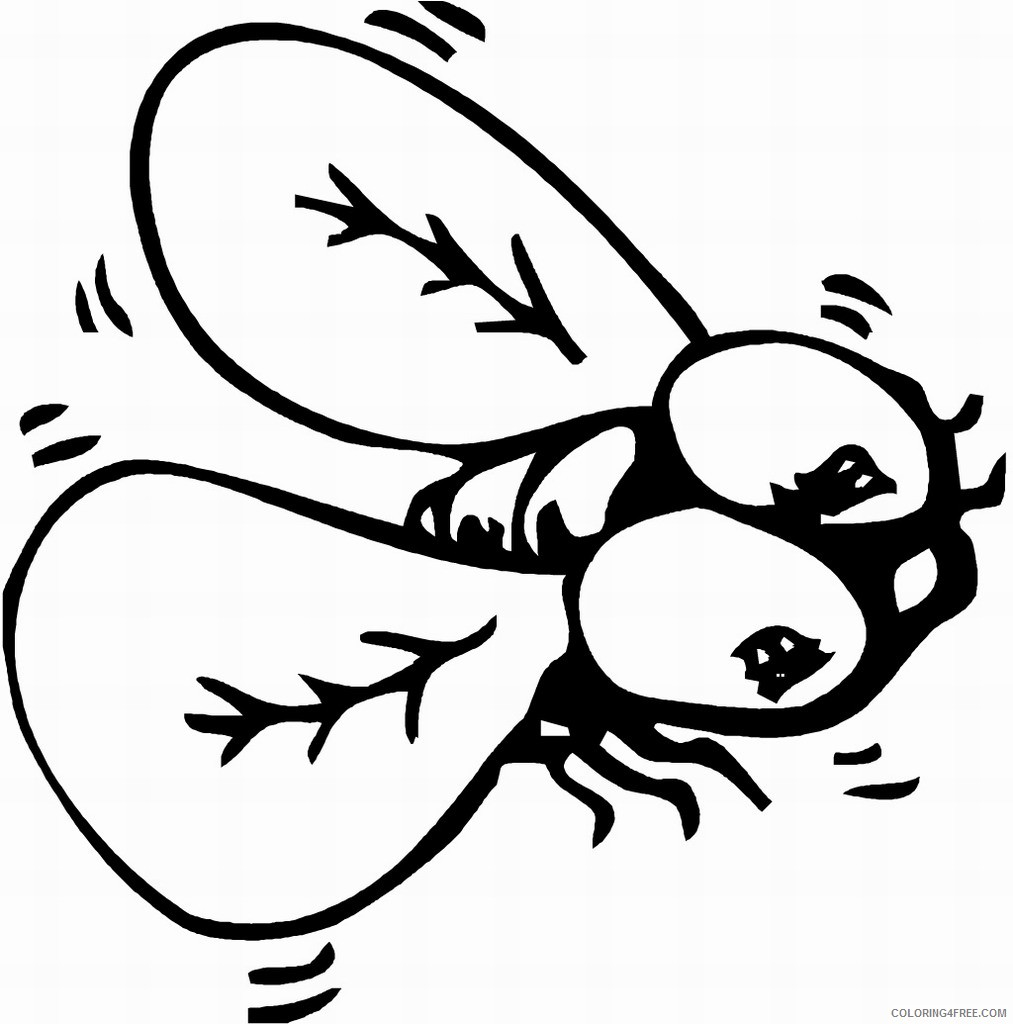 insect coloring pages fly Coloring4free