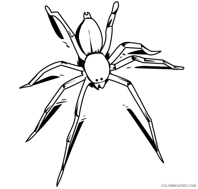 insect coloring pages spider Coloring4free