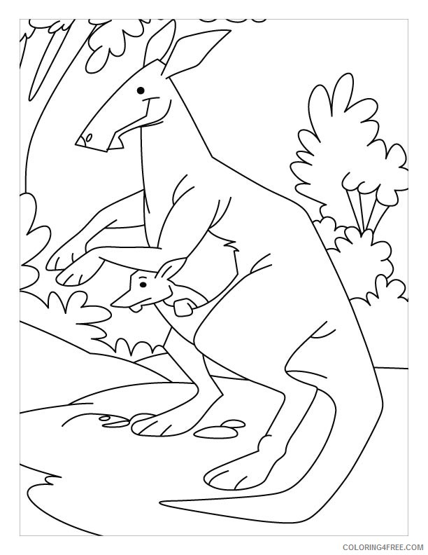 kangaroo coloring pages for kindergarten Coloring4free